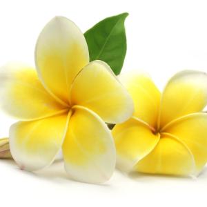 Un-raggio-di-sole-Massaggio Ayurveda Hawaiano Minusio